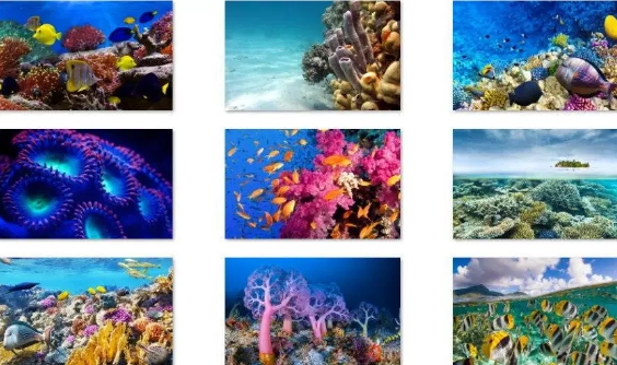 fish and corals windows theme