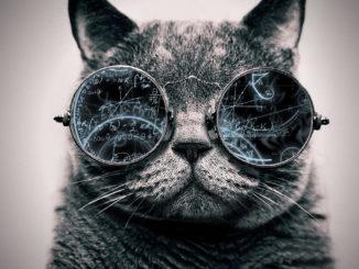 cool_cat__genius_by_tovalhalla-d95cisd