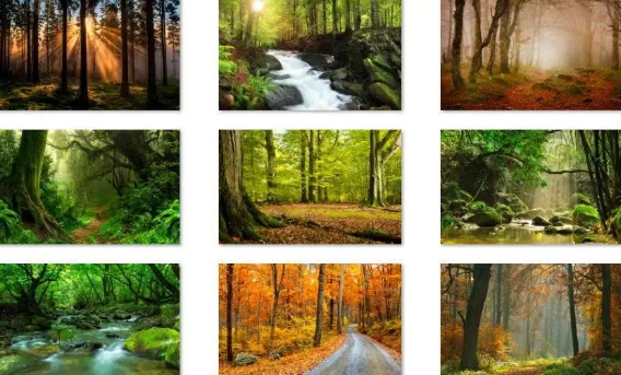 forest for the trees windows 10 theme download